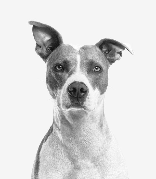 cirugia-veterinaria-san-fernando