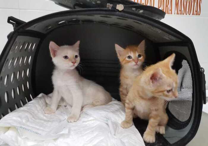 consulta-veterinaria-gatitos