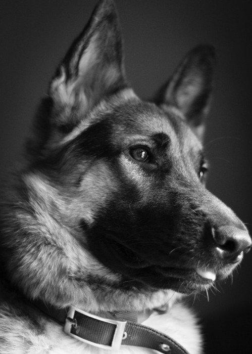 consulta-veterinaria-san-fernando