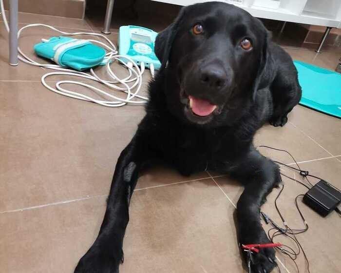 fisioterapeuta-veterinario-india