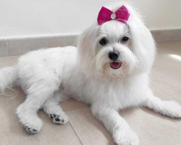 peluquria-canina-bianca