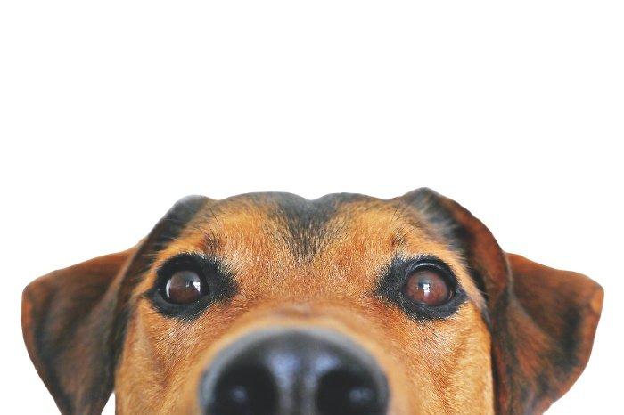 servicios-veterinarios-mascotas