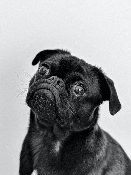 vacunacion-perros-san-fernando