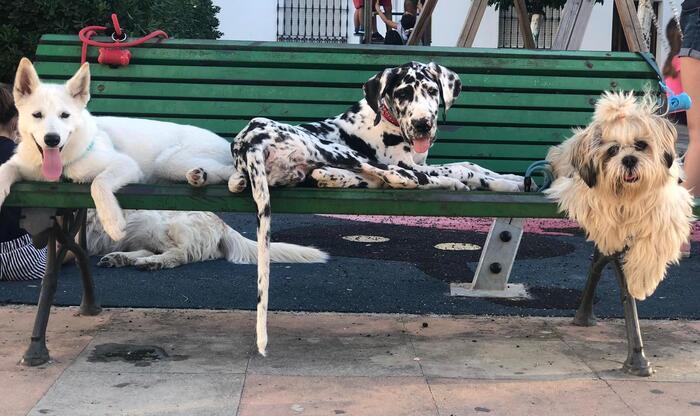 vacunas-perros-coco-y-amigos